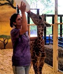 hovatters-wildlife-zoo-baby-giraffe