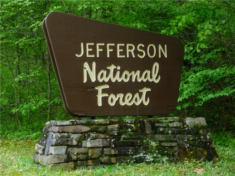 jefferson forest 2