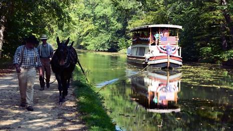 c & o canal mule