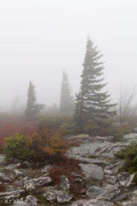 WV National Forest Monongahela